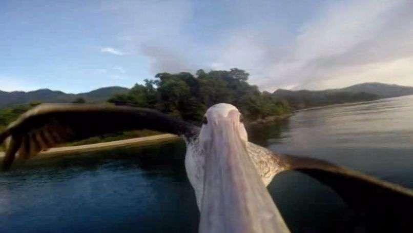 Esto es lo que observa un Pelícano al volar