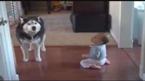 Bebé y perro son furor en la red al tener divertida charla