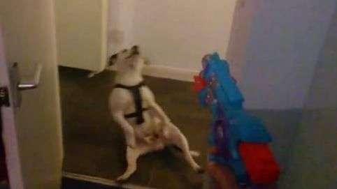 Perro finge morir de un disparo y es estrella de la web