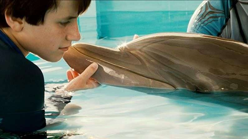 'Dolphin Tale 2', enfrentará su más grande desafío