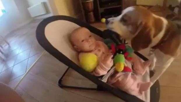 Así se arrepintió este perro por robar juguete a bebé