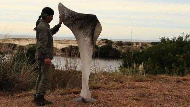 Exhiben esculturas gigantes hechas con huesos de ballena