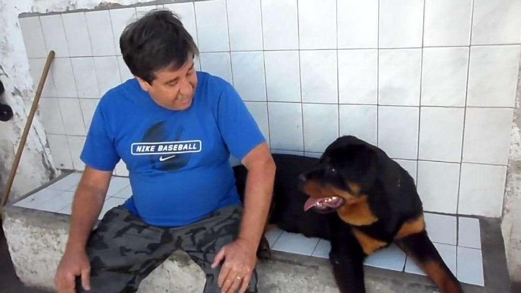 Perro Rottweiler pide cosquillas de un modo muy particular