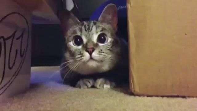 Los gatos más famosos de la red se unen para salvar a ...