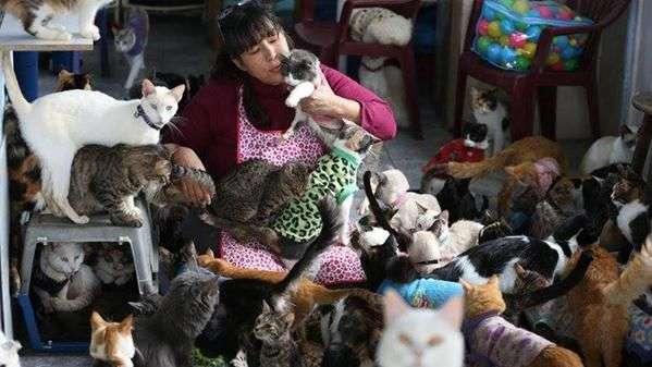 Convierte su casa en un albergue de 175 gatos con leucemia