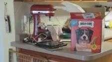 Ave é filmada 'roubando' comida para alimentar cães