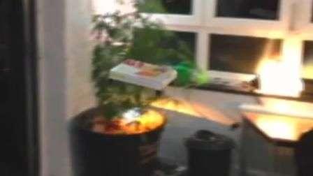 Pizza equipada com drones chega voando à mesa na Alemanha