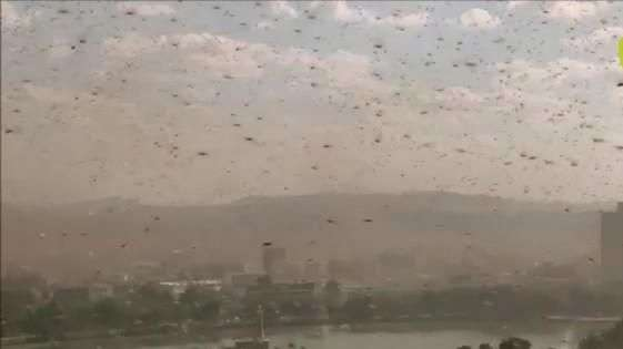 Un enjambre de chapulines cubre la capital de Madagascar