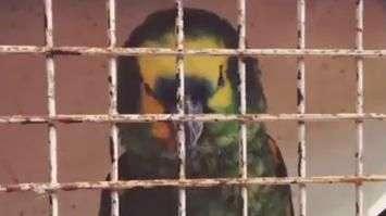 Papagaio de Falcao García grita golaço e homenageia craque