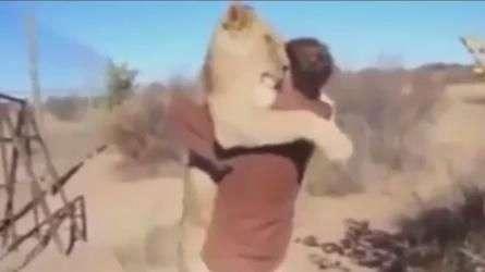 Veja momento em que leoa abraça homem que a salvou