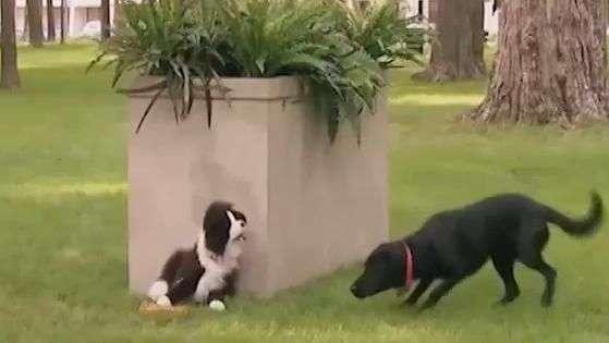 Furor web: Perro de peluche se luce asustando a reales