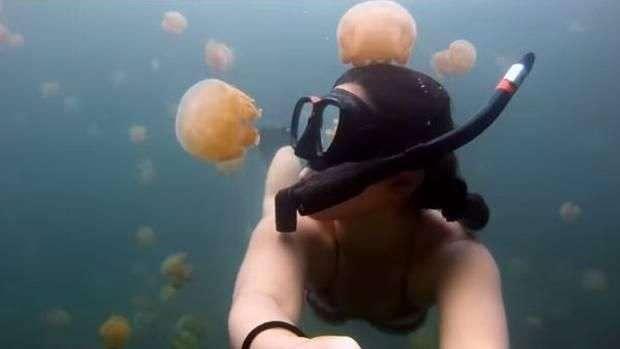 Increíble: se graba nadando con millones de medusas