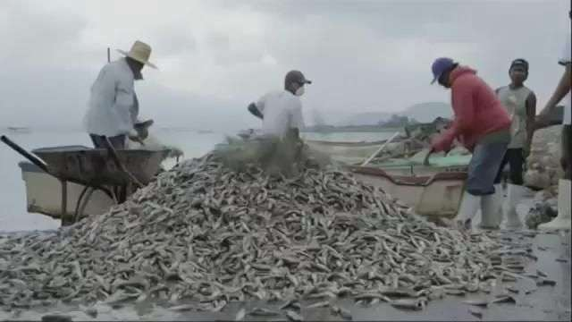 Thousands of Fish Dead in Mexico Lake