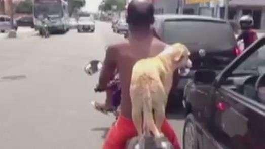Cão pega carona em garupa de moto e vira 'hit'