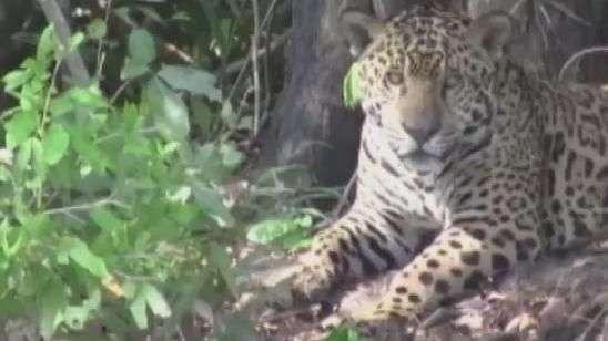 Turistas descobrem o Pantanal brasileiro
