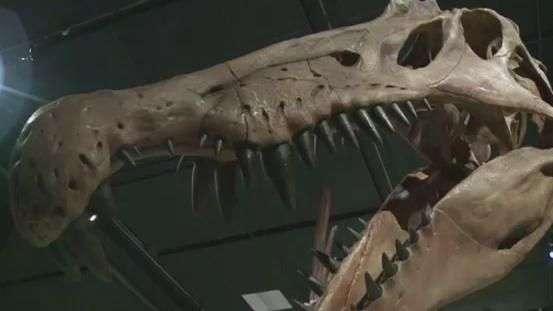 Maior dinossauro predador é cruzamento entre pato e crocodilo