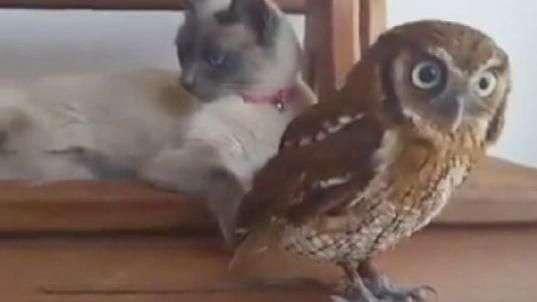 Gato e coruja compartilham momentos de lazer