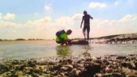 Homens salvam ovelha atolada em praia da França