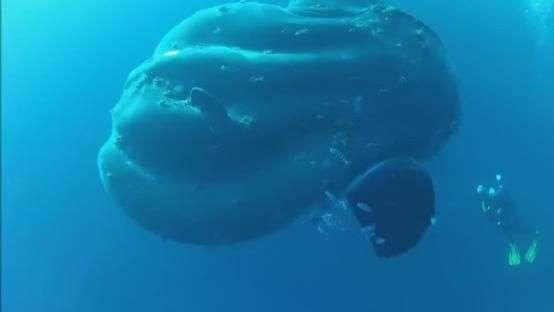 Homem flagra peixe gigante no fundo do mar