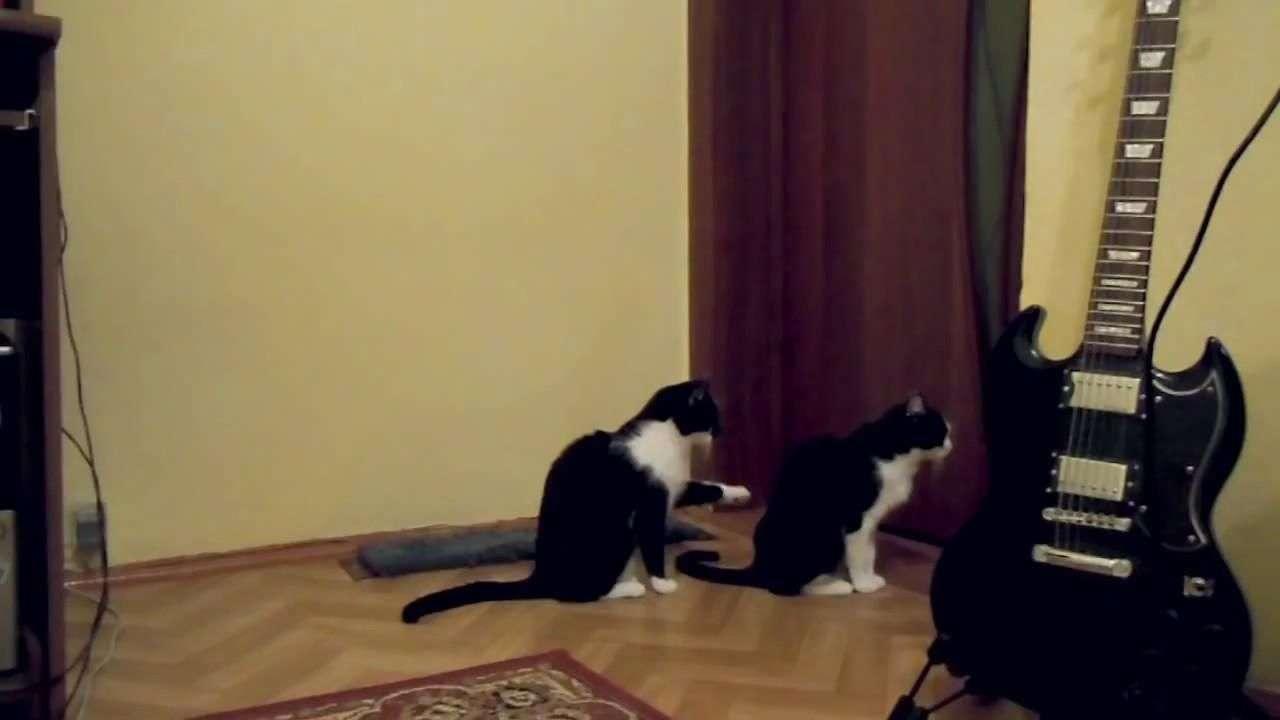 Un gato pidiendo perdón a su compañero se vuelve furor ...
