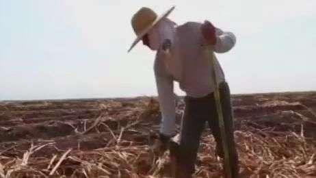 Setor de cana-de-açúcar do RJ resiste a ambiente de crise