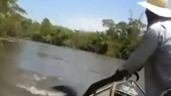 Anaconda gigante sorprende a turistas en Brasil