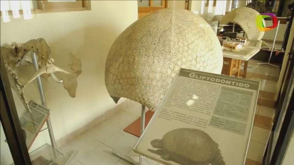 Cementerio paleontológico en riesgo en Bolivia, Sucre