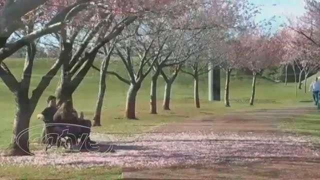 Jardim Botânico de Curitiba completa 23 anos