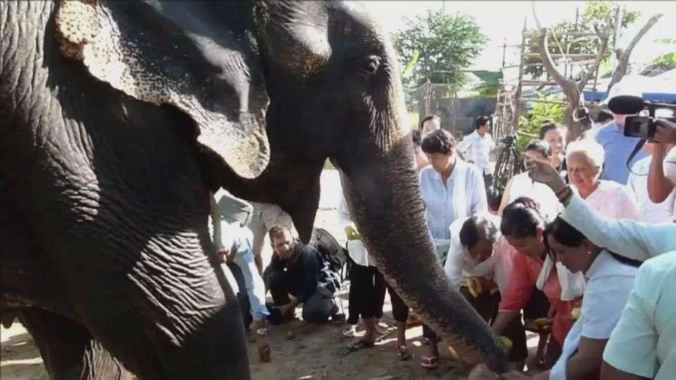 El elefante se jubila en la selva