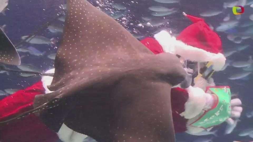 Papá Noel nada entre peces y mantarrayas