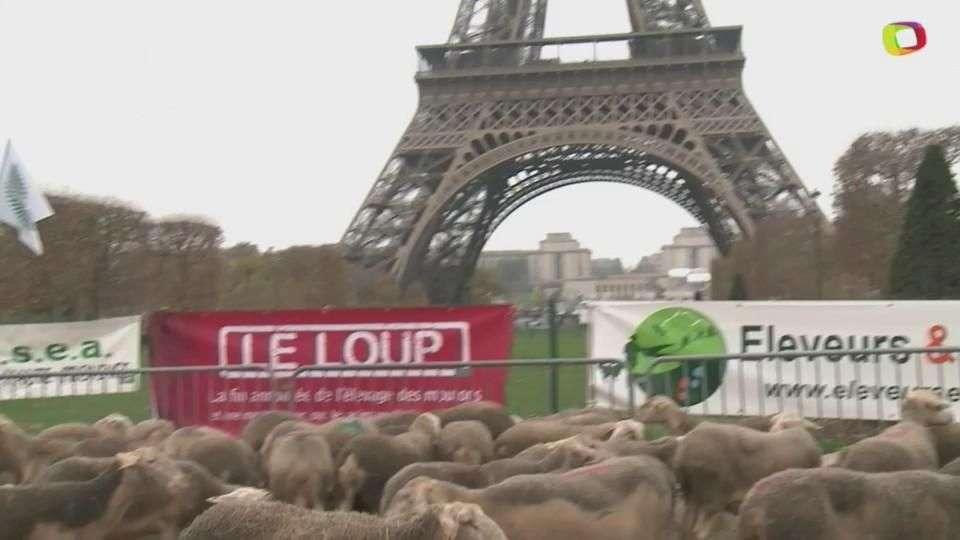"""Así ovejas """"protestan"""" contra los lobos en Paris"""