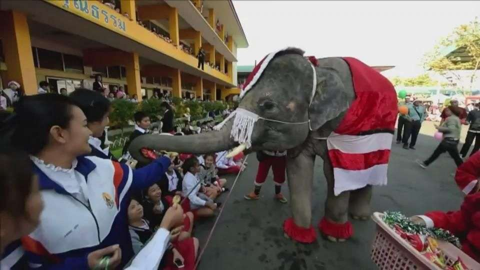 Elefantes Papá Noel en Tailandia