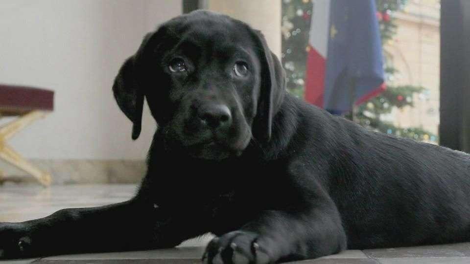 Hollande recibió un cachorro como regalo de navidad