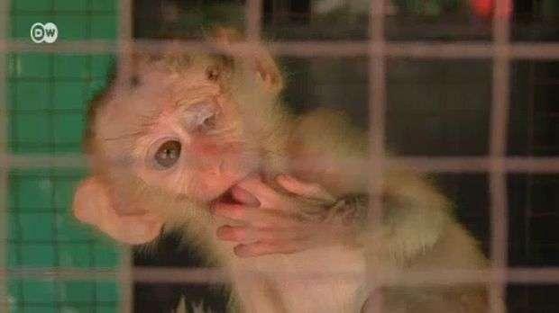 Camboya: lucha contra el tráfico de animales