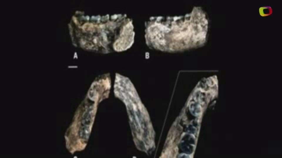 Primer humano vivió 500 millones de años antes de lo que...