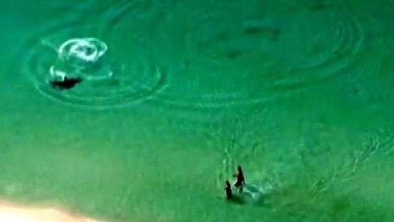 ¡Salgan del agua! Desesperados gritos a bañistas por tiburón