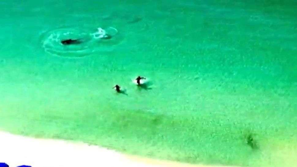 Una pareja escapa milagrosamente del ataque de un tiburón martillo