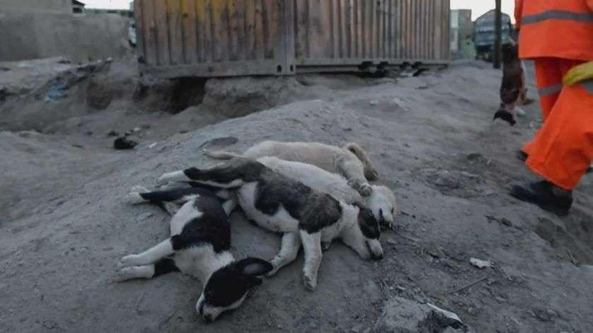 Exterminio de perros en Kabul