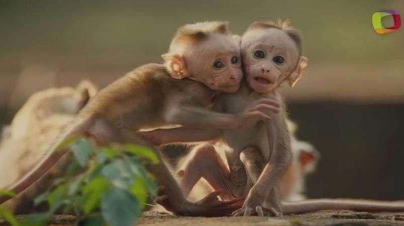 'Monkey Kingdom', donde se necesita más que ingenio