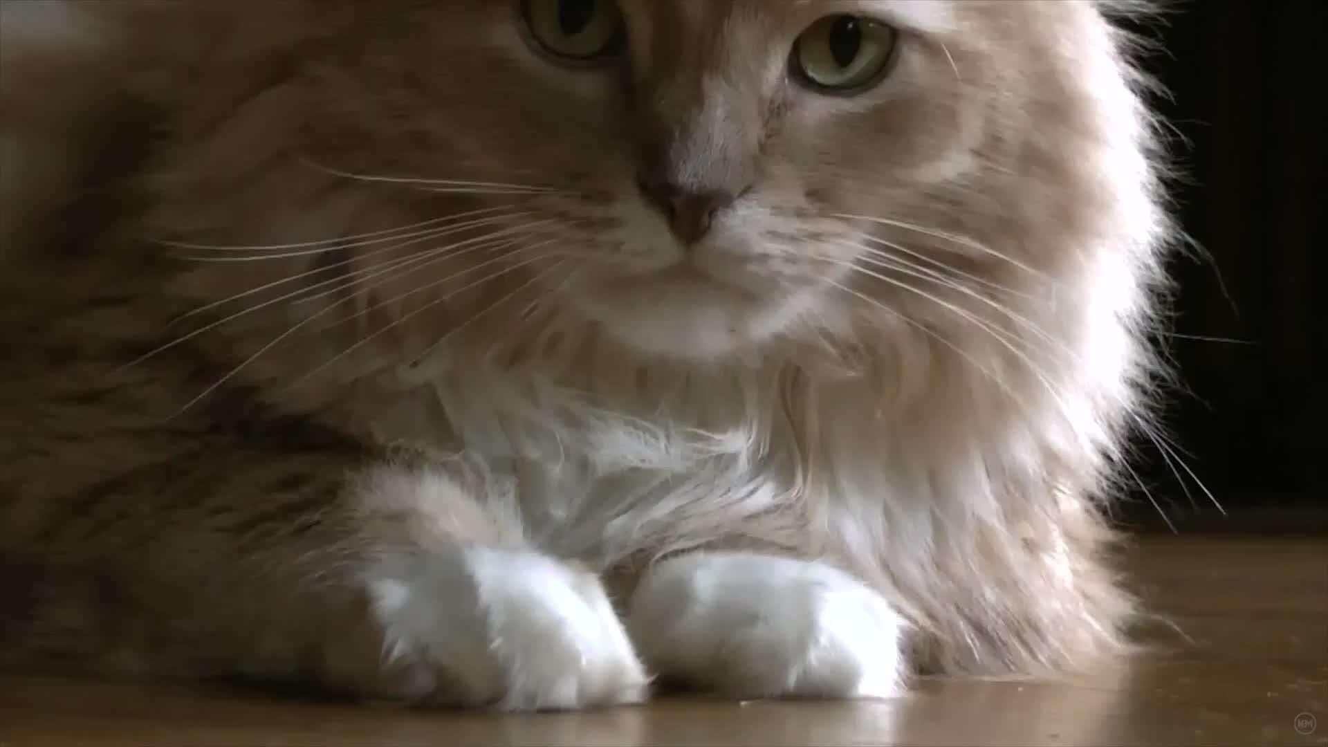 La gente con gatos es purrrfecta