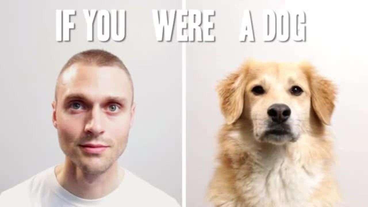 Cómo sería tu vida si fueras un perro