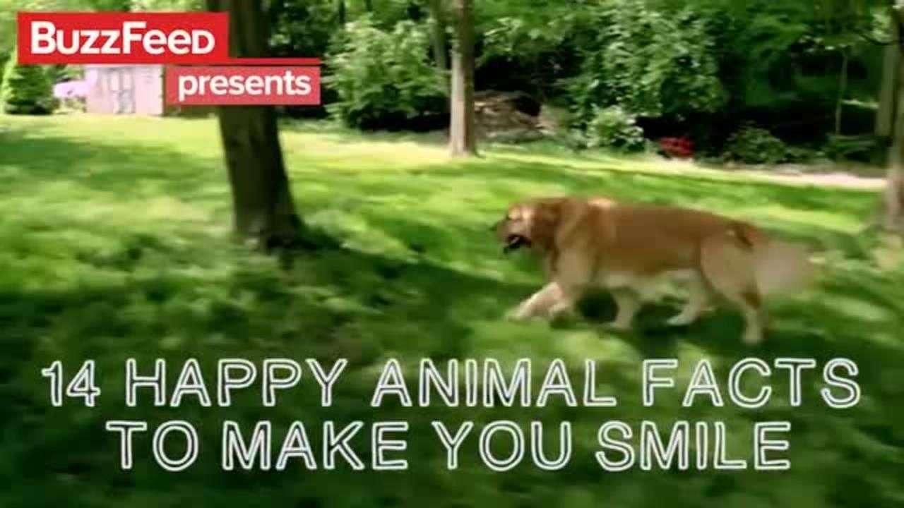 Hechos animales que te harán sonreír