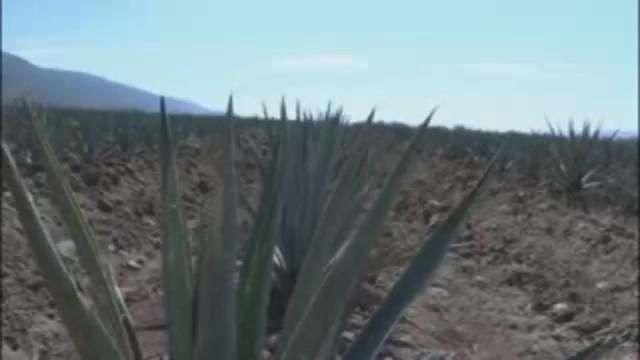 Kate del Castillo a la espera de la certificación de su tequila