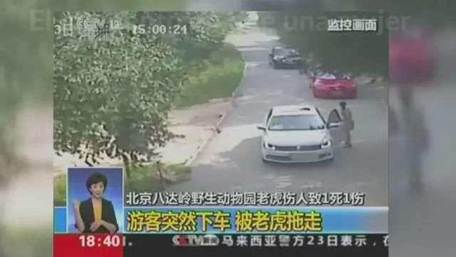Dramáticas imágenes : Tigre ataca a una mujer en parque de Pekín