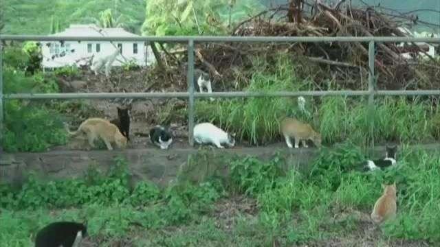 Hawaii en controversia por el efecto de excrementos de gatos
