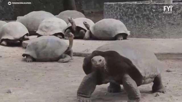 Ban Ki-Moon adoptó tortuga galapagos