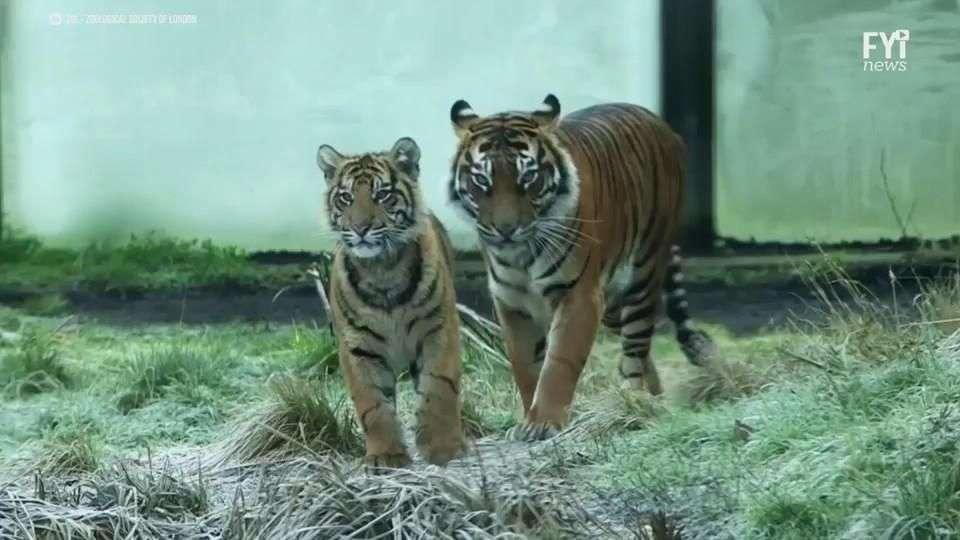 El Zoo de Londres hace un censo muy especial