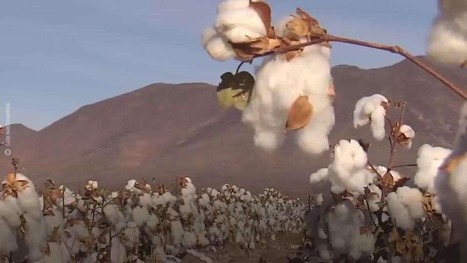 El algodón y el capitalismo tienen una historia juntos