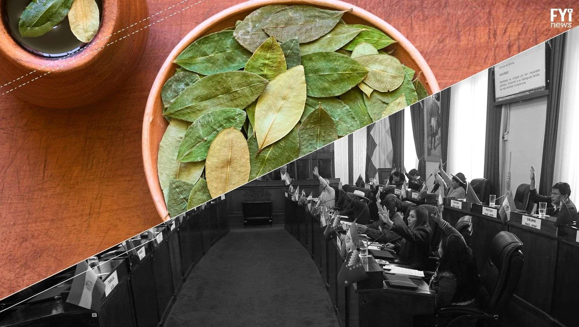 ¿Para qué quieren más cultivos de coca en Bolivia?