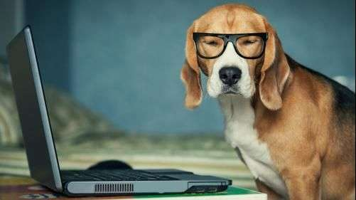 Las mejores aplicaciones para mascotas